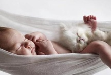 kediler&bebekler