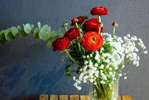 Kvety / o rastlinach a kvetoch