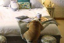 Zwierzęta na łóżku
