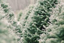 Arbre de Noël commerce