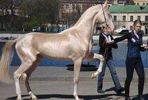 Horses  / by jan Goode
