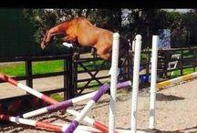 Koně ♡