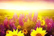 Flowers  / by Christine Smith