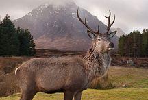 Scotland / by Cindy Lamons
