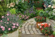 beautiful flowers & garden