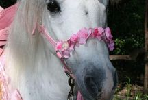 Unicorns!!!! // Holiday and Party / Find ideas for your next unicorn party