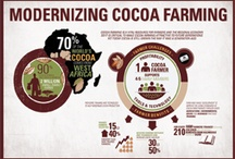 Ethical Cacao / Fair trade, sustainability, organic farming, child labor, disease vulnerability, new world markets, political instability, climate change, etc. - the challenging of cacao, the commodity.