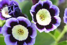 blomster