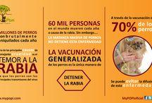 Infografías / Infografías acerca del cuidado de los perros
