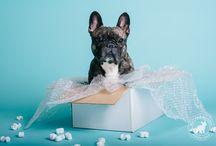 Kutyabolond Fotóstúdió / I'm a dog photographer. Here are my works.