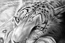 Pencil Art.....beauty,  beautiful and the rest.