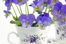 tazzine fiorite