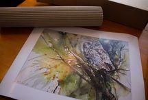 Drucke von unseren Aquarellen / Wenn Sie sich in ein Motiv verliebt haben und das Original schon verkauft ist,  die Größe nicht passt oder das Original nicht mit ihren Preisvorstellungen übereinstimmt, dann empfehlen wie Ihnen einen Druck von unseren Aquarellen.Hier ein paar Bespiele ;-) http://www.atelier-koebsch.de/Drucke-unserer-Aquarellen #Drucke #Reproduktionen #Aquarelle #Leinwand #Galeriedruck #Acrylglas #Keilrahmen #Poster #Posterdruck #Aludibond