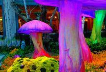 Sienestys / Tähän pinnataan sieniä