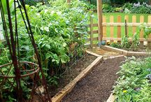 Herb and edible flower gardens