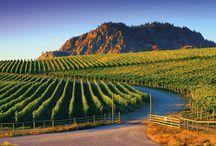 Wine  / Wine from the Veranda Beach Cellars Winery located in the Okanogan Valley.
