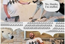 Funny / by Debra Brown