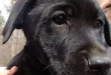 Pet Rescue / by Melanie Wycoff