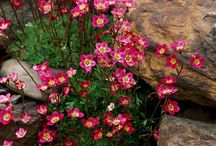 Rockeries That Rock
