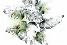Botanical Art / Botanical art prints from original watercolor and pencil artworks by Tania Estevez