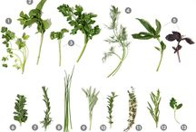 Herbs  / Herbs for cooking and healing. / by Beth Matheus