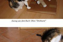 per gatti
