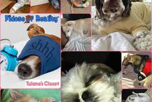 Dogs In Pajamas and Sleeping / by Fidose of Reality
