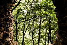 Skogar