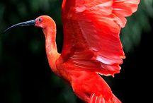 Red/Scarlet/Κοκκινο/Fire/Κολαση.