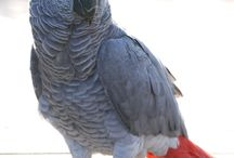 Papagáje