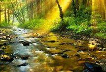 Natură