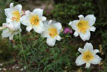 誕生花(Birth flower)