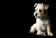 Pet Photography / Inspiration for pet poses and ideas