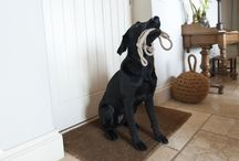 Boutique Dogs / Because we love our doggie companions and like them to have a fab holiday too!