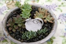 Succulents / How to display and take care of succulents