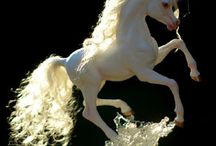 Unicorns / Magical unicorns