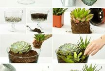 Succulants & Terrariums