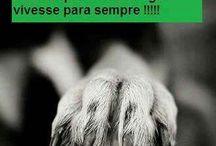 Animales 02