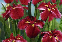 цветы и кустарники