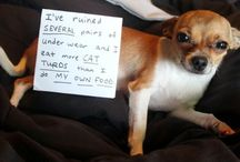 Dog shaming / by Love, Missy Grace