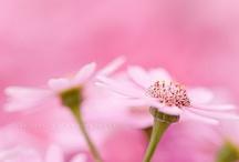 Flowers'dream