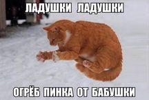 КОТЫ)))