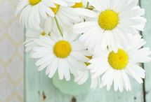 ασπρα λουλουδια