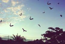Diversas fotos / Foto tirada do céu. Beleza e paisagem.
