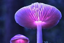 beautiful mushrooms / this is just beautiful - NATURE