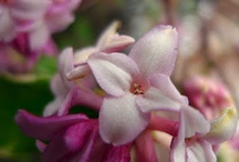 Fragrant Blooms to make you Swoon