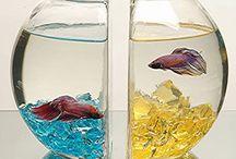 Home ideas / Fish bowl