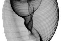 Helix, snail, spiral