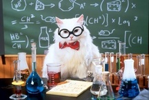 Science Cat / by Rachael Woods