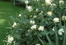 композиции с розами
